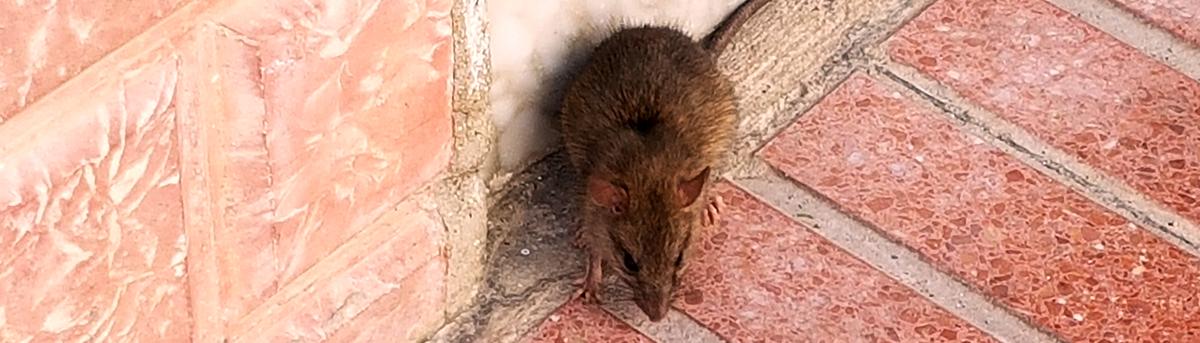 La rata sampedreña que no llegó a FITUR